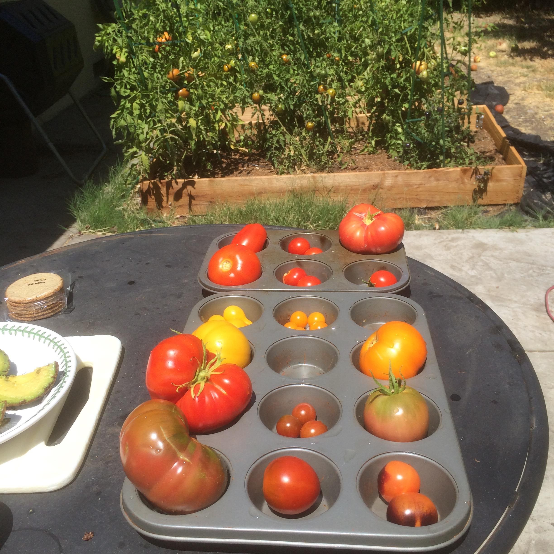 Tomato garden